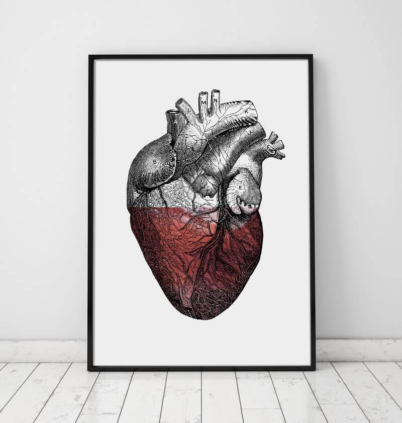 Heart anatomy art poster - Codex Anatomicus
