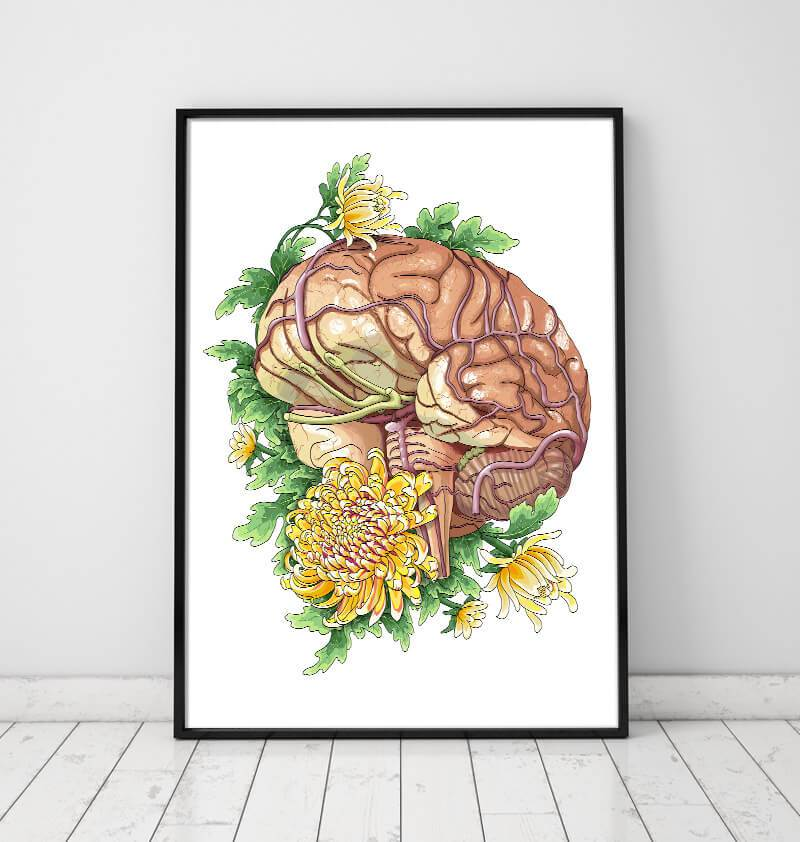 Brain anatomy art poster - Codex Anatomicus