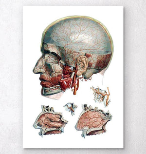 Geometric head and nose anatomy art