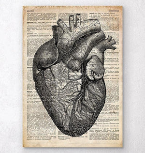 Heart anatomy medical art print