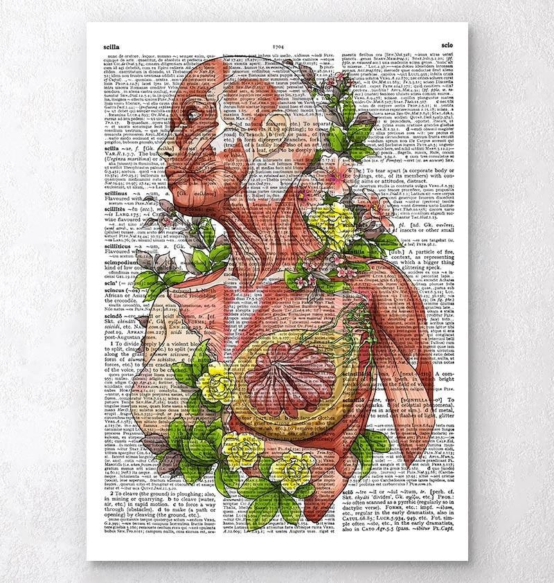 Female body anatomy art - Dictionary Page - Codex Anatomicus