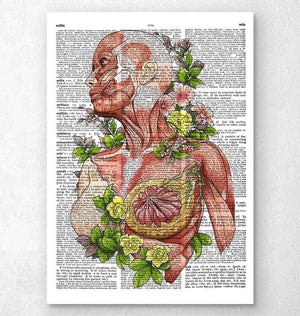 Female body anatomy art - Dictionary Page