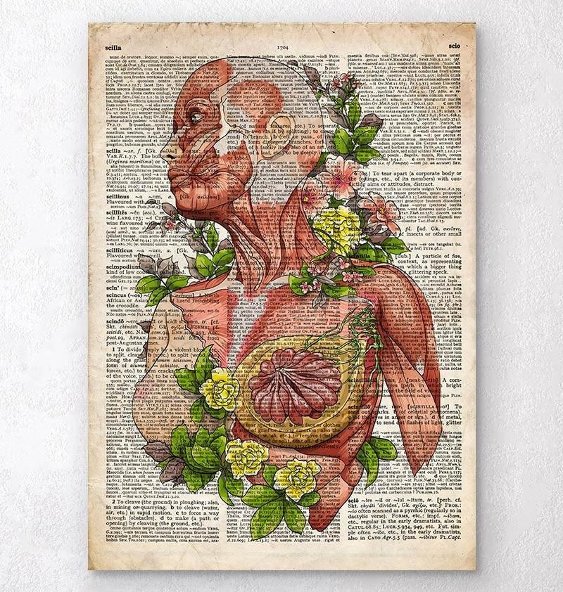 Female body anatomy art - Old dictionary