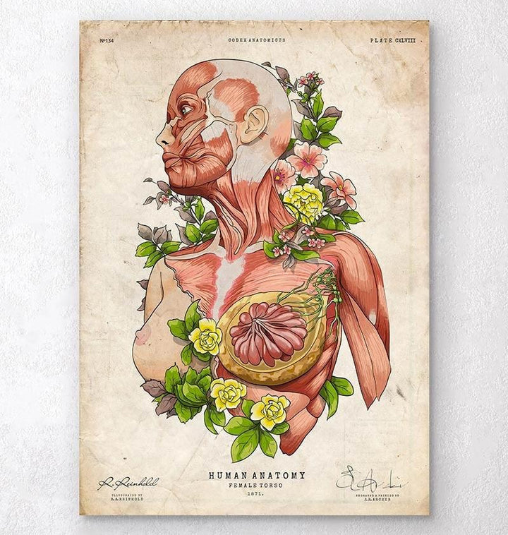 Female body anatomy art