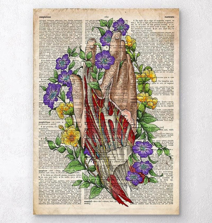 Hand anatomy art - Old dictionary page