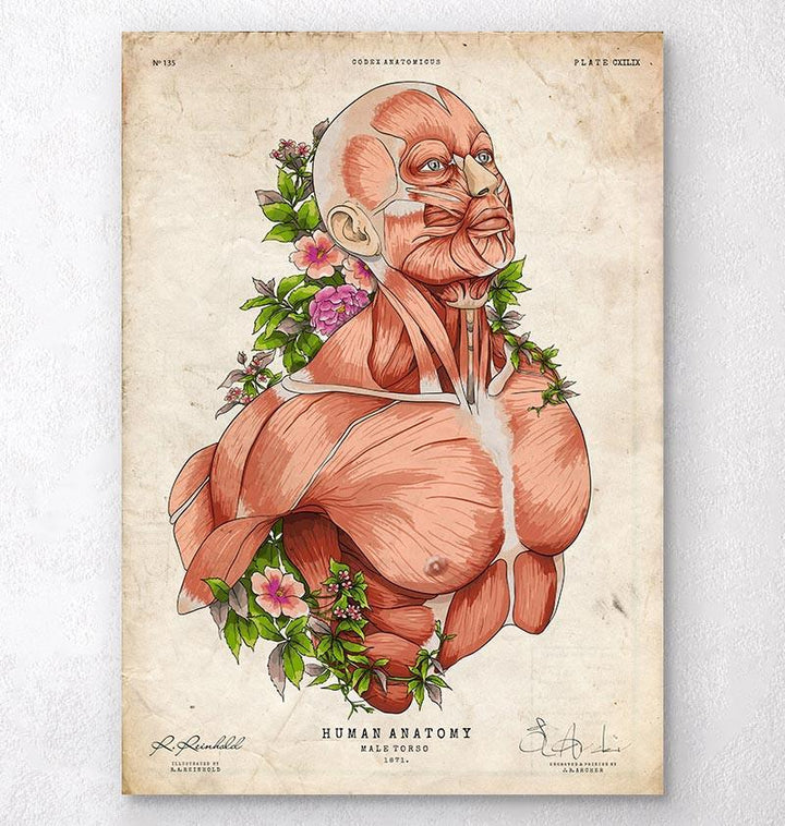 Male body anatomy art