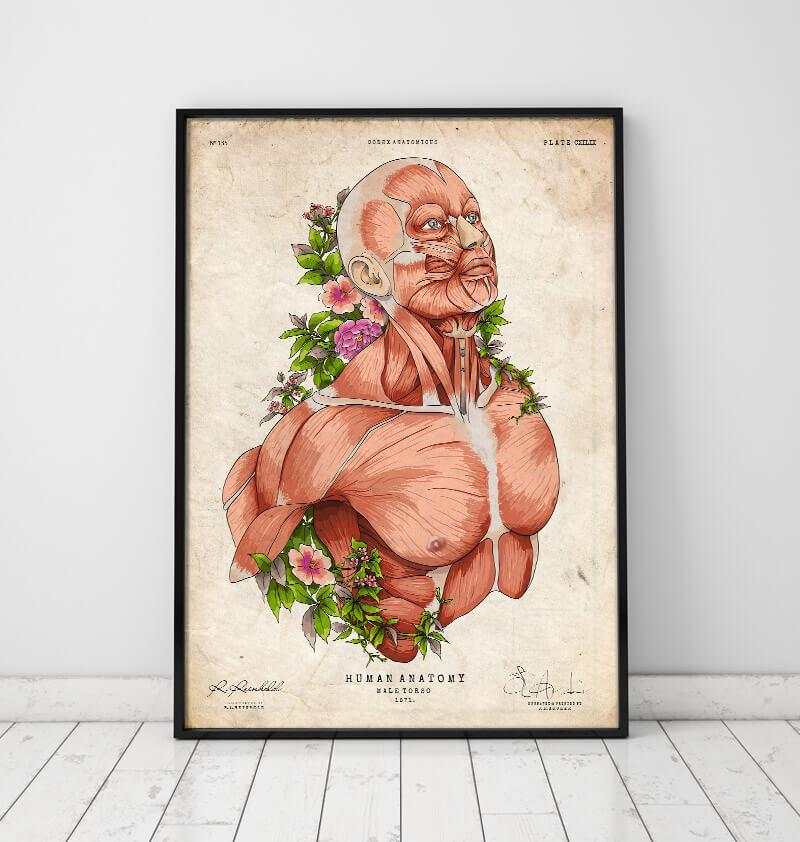 Male body anatomy art in a frame by codex anatomicus