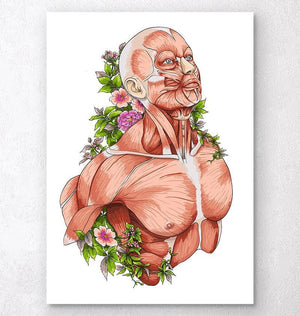 Male body anatomy art on white background