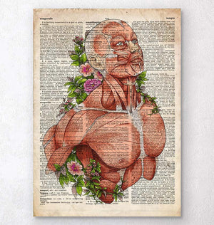 Male body anatomy art - Old dictionary page