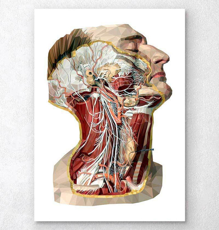 Geometric head, neck and face anatomy art