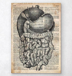 Digestive system dictionary art