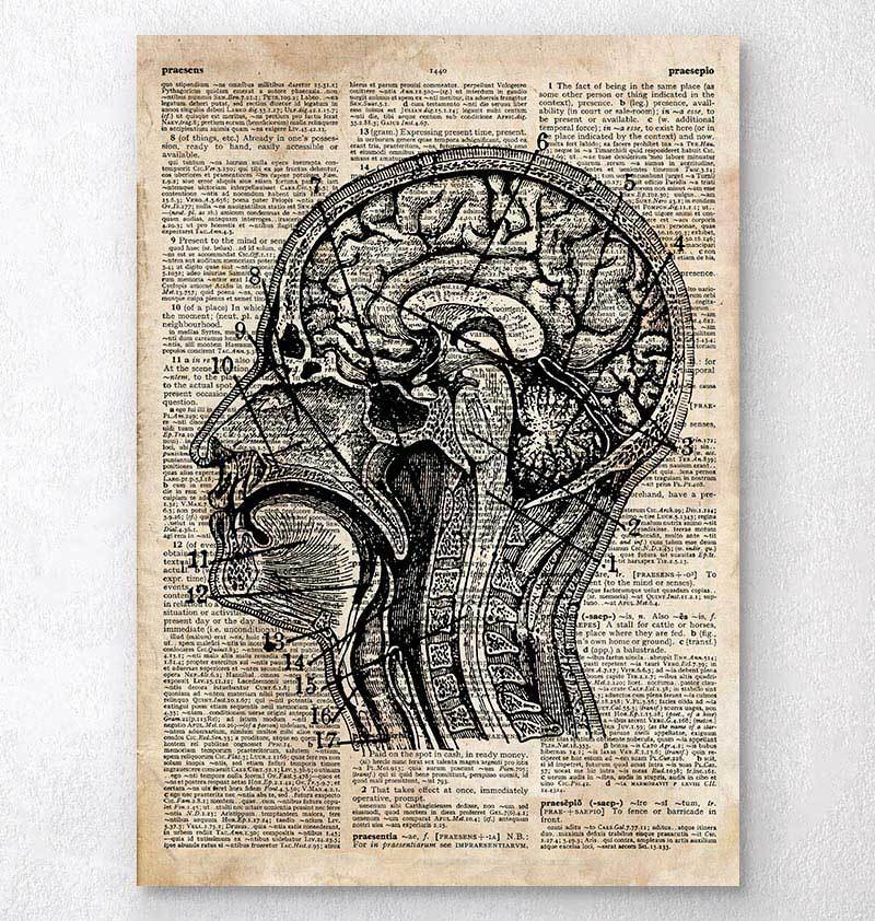 Brain anatomy art on old dictionary page