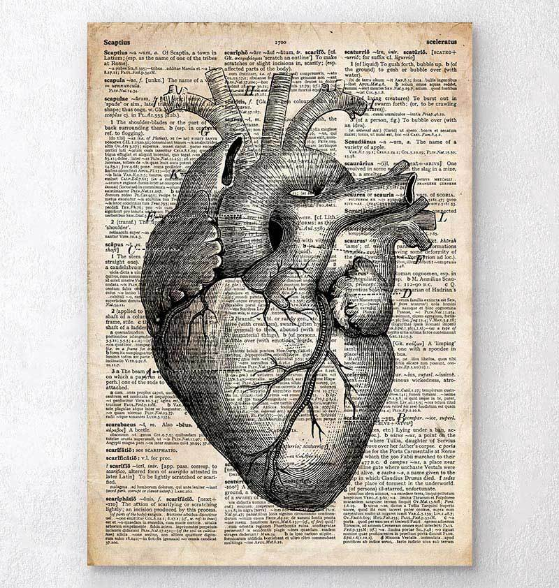 Heart anatomy art II Old dictionary page Codex Anatomicus