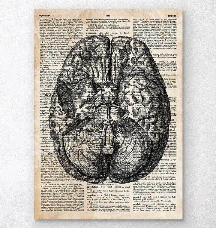 Brain anatomy dictionary art