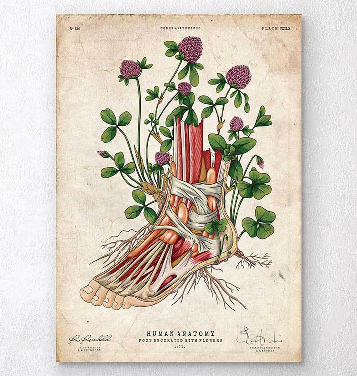 Floral anatomy art