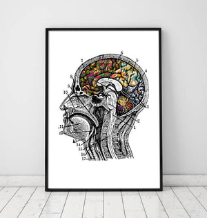 Brain anatomy art poster in color