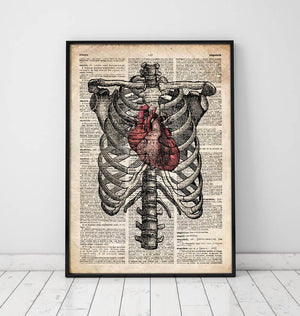 rib cage anatomy poster on dictionary page