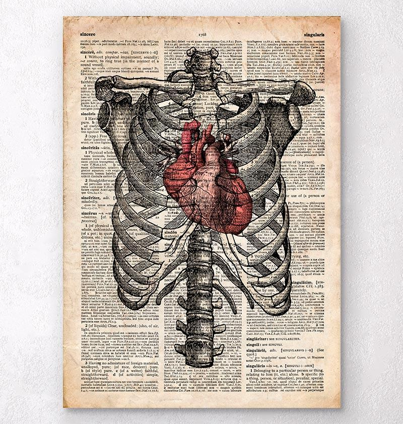 Heart and Rib cage - Anatomy art - Codex Anatomicus
