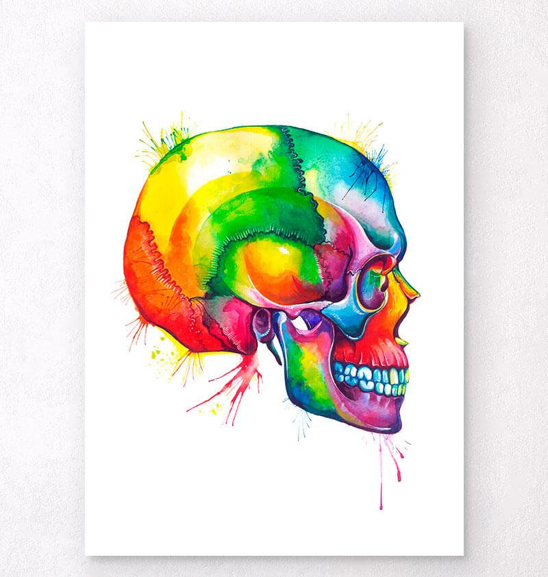 Skull anatomy art by Codex Anatomicus