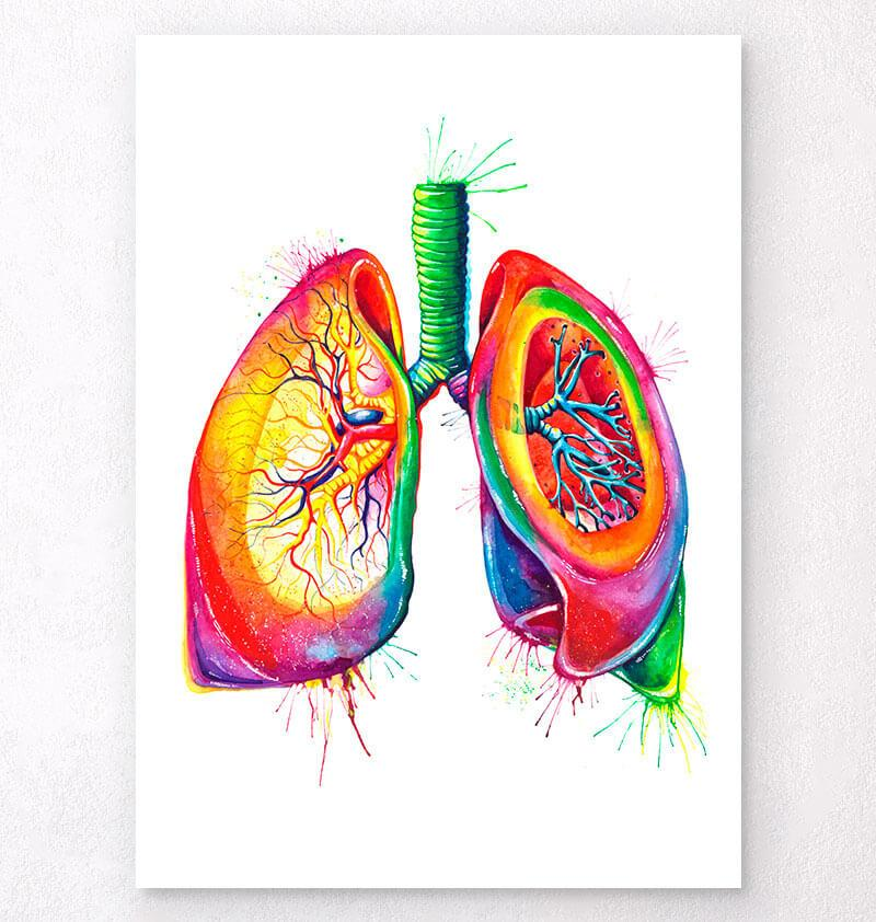 Lungs anatomy