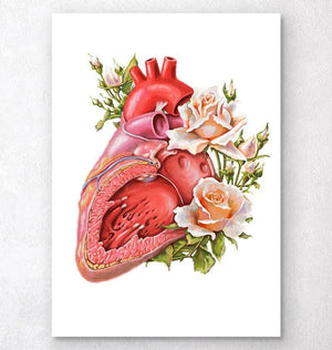 Anatomy of a heart