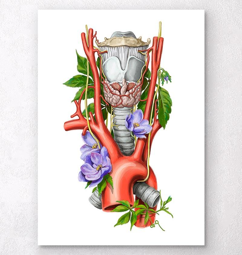 Larynx anatomy - Thyroid anatomy