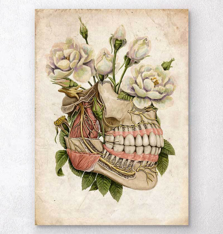 Teeth anatomy art