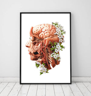 Head, Brain and Arteries anatomy poster