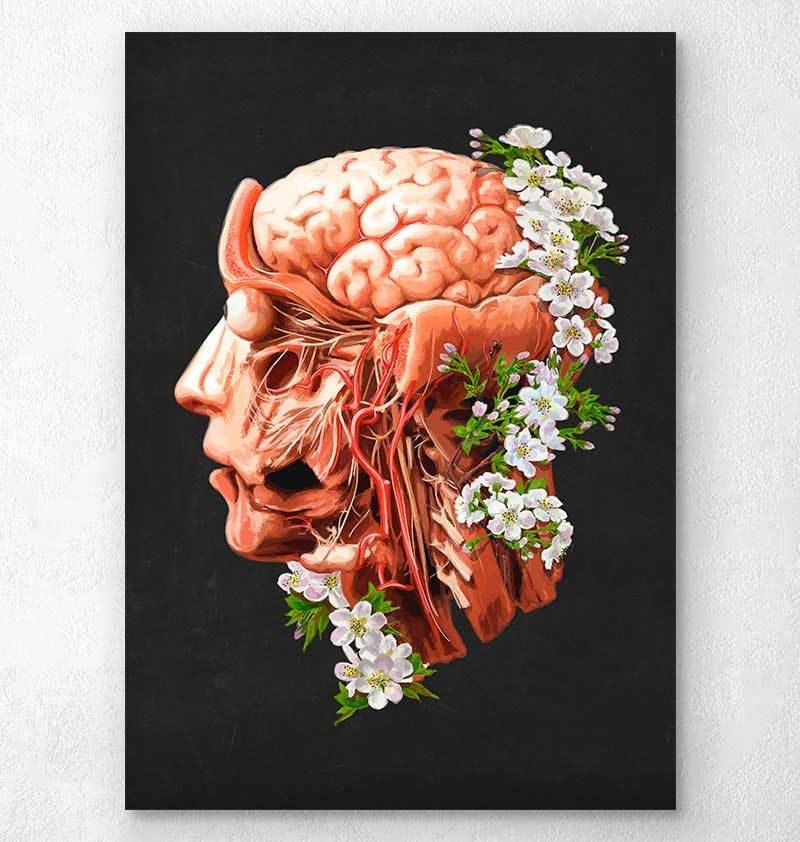 Human head anatomy