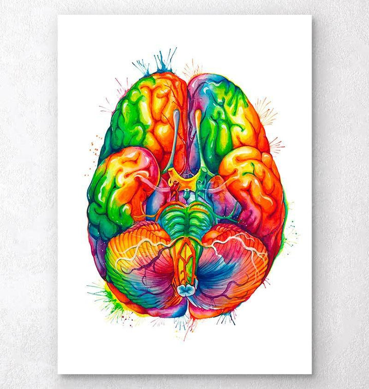 Brain anatomy view from the bottom with circle of willis