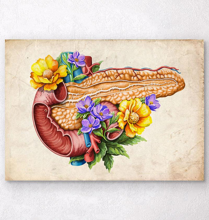 Pancreas anatomy illustration