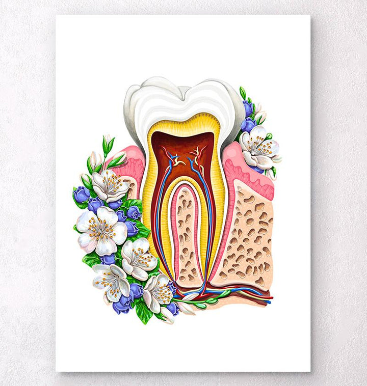 Tooth anatomy chart