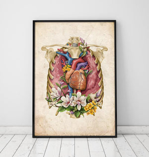 Heart anatomy poster by codex anatomicus