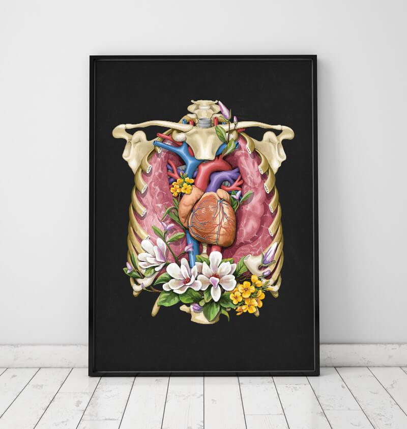 Heart, lungs and a ribcage anatomy art by Codex Anatomicus