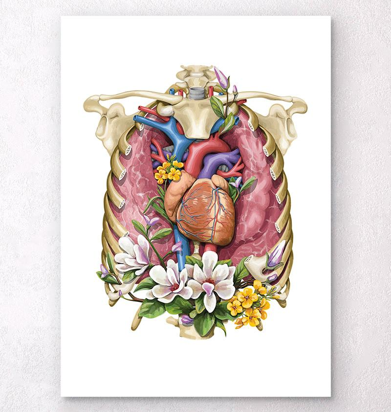 Lungs and heart anatomy