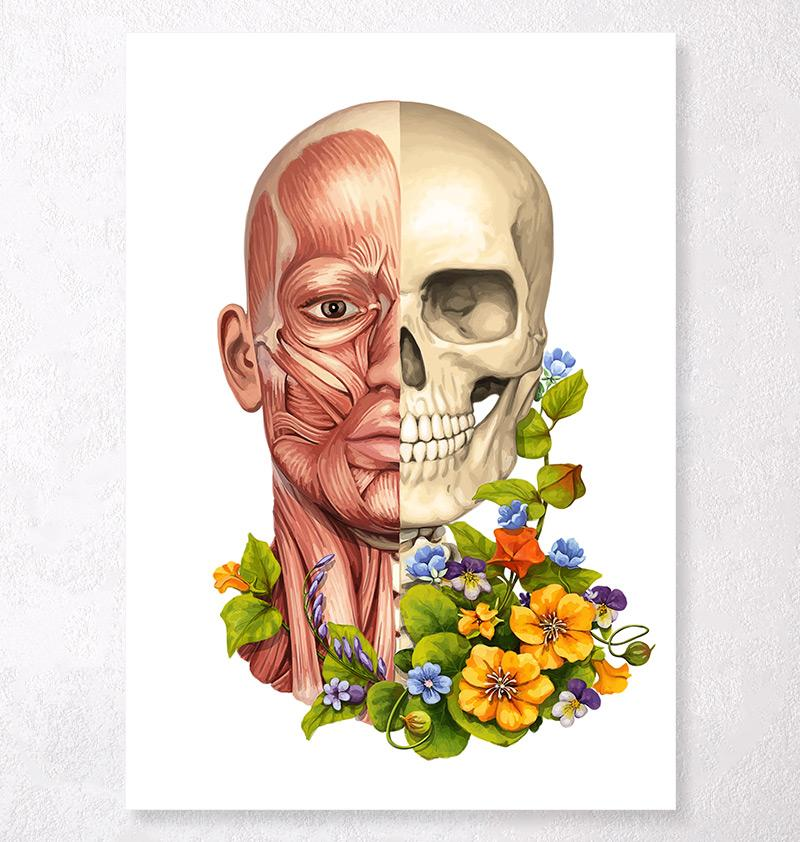 Facial muscles anatomy art
