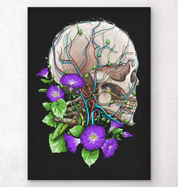 Skull anatomy art