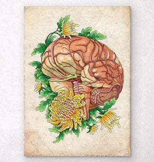 Human brain anatomy art