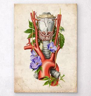 Larynx and aorta anatomy