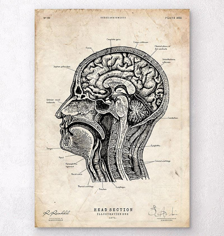 head section art print