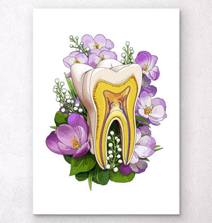 Tooth anatomy art