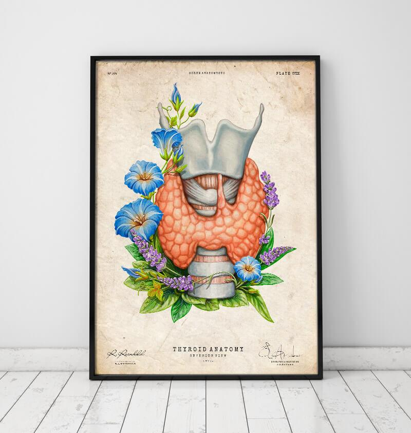 Thyroid poster by codex anatomicus