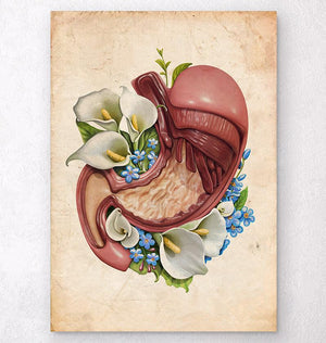 Vintage stomach anatomy poster
