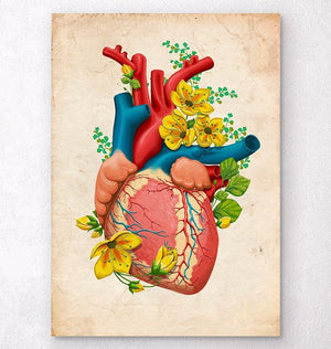 Heart anatomy chart