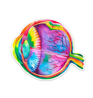 Eye anatomy sticker