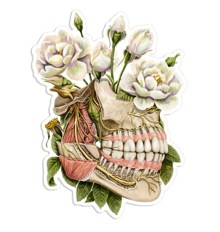 Dental sticker