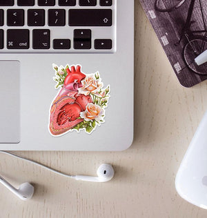 Heart anatomy sticker
