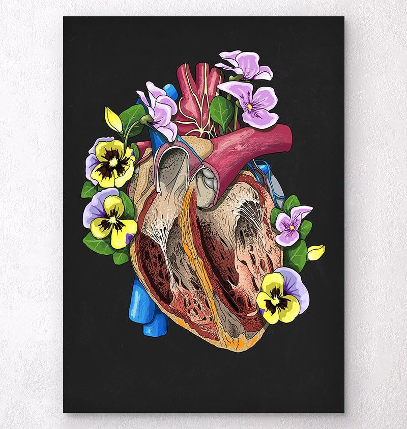 Heart dissection anatomy