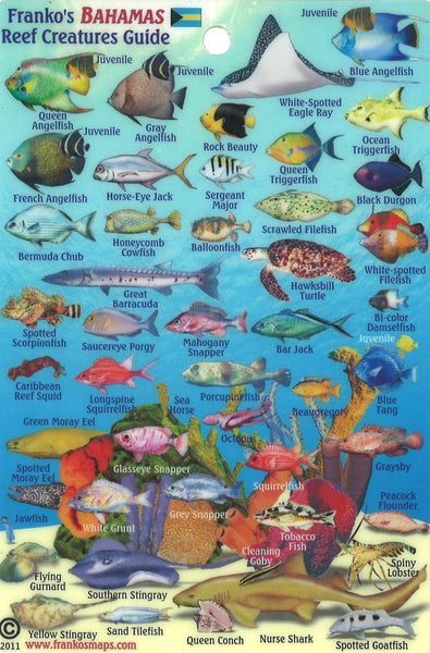 Buy map Bahamas Fish Card, Bahamas Mini Fish Card 2011 by Frankos Maps Ltd.