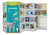 Buy map Svalbard Flora & Fauna Field Guide by 49southphoto